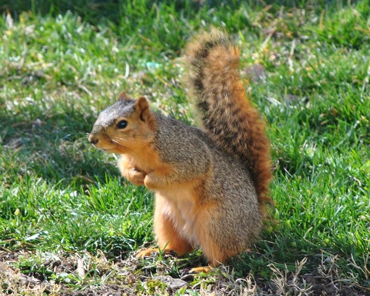 CIC-Squirrel-Hunters-11.26
