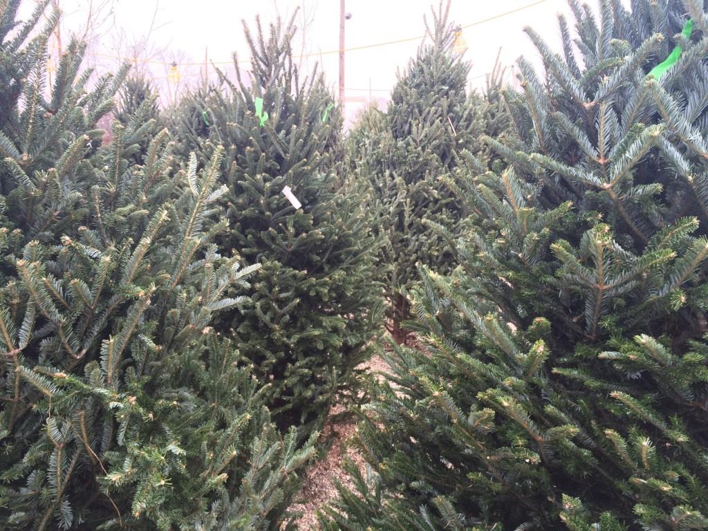 CIF-COM Preserving Trees #2