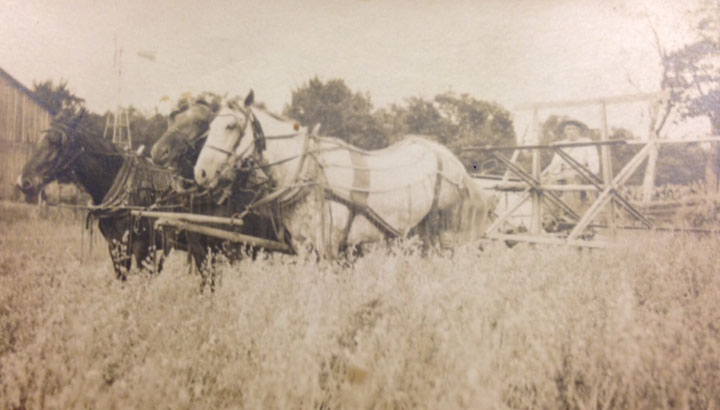 Haying with Draft Horses. (Photo courtesy by Tom Flanagan