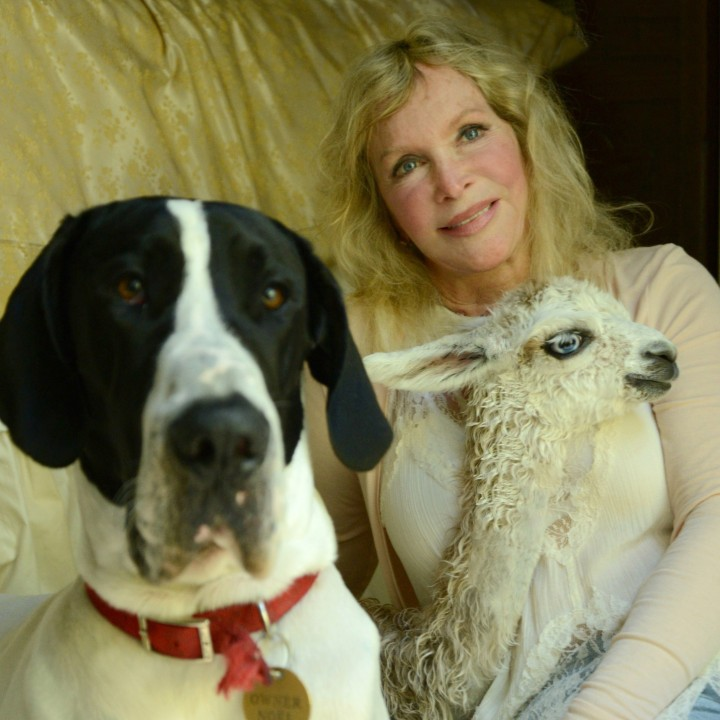 Nancy Noel has provided a home for many animals, including her Great Dane, Degas, and llama, Luna. (Submitted photo by Rob DeVoe)
