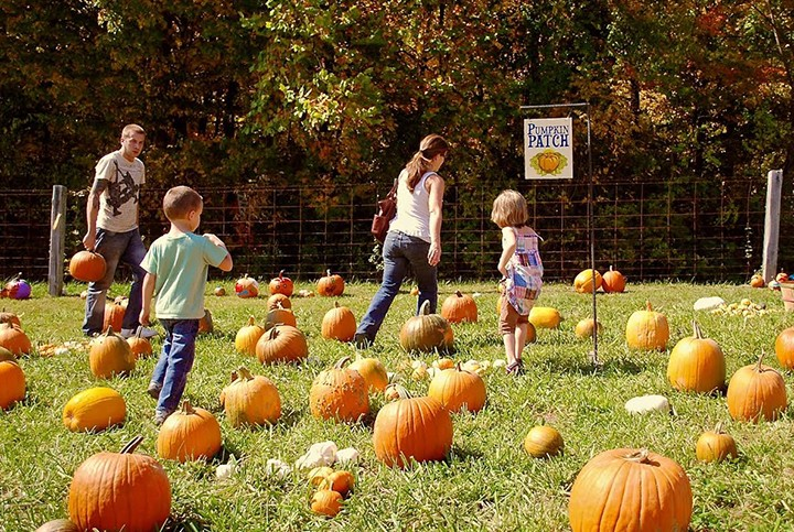 Children and families enjoy the pumpkin patch at the Traders Point Creamery Oktoberfest. (Submitted photo)