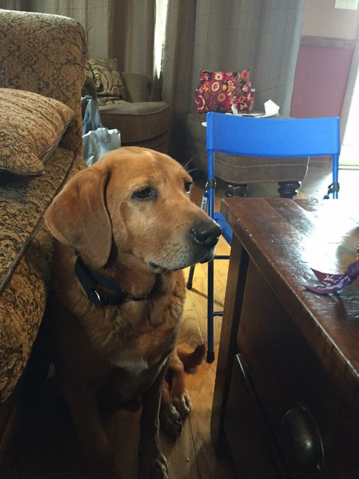 Ray, a dog found abandoned in a dumpster in Whitestown, is in good condition and living with a foster family. (submitted photo)