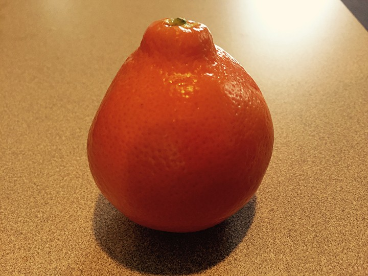 The tangelo resembles a clementine in appearance, but it is sweeter and juicier. (Photo by Anna Skinner)