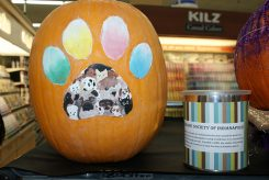 A pumpkin in support of the Humane Society of Indianapolis at the 2015 event. (Submitted photo)